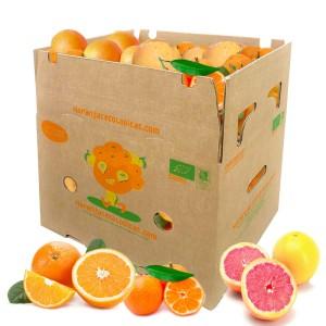 15 kg Orangen, Mandarinen u. Grapefruits